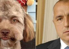 КУЧЕ ЧОВЕК, истина е! КОЙ е кучето, кой човекът, ВИДЕО, кръстоска е между ПУДЕЛ и …..