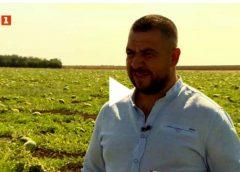 ЦИГАНИН е най-големият производител на ДИНИ в България и за ЕВРОПА. Този българин е засадил 1600 декара. Вижте какво говори и ще се изумите!  Респект. ВИДЕО на БНТ: